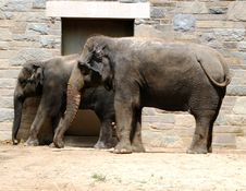 Free Elephant And Baby Stock Images - 6316374