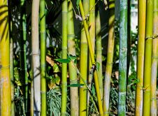 Free Bamboo Stock Photos - 6316513