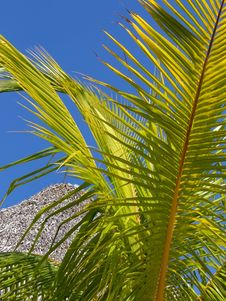 Free Palm Tree Leaf Stock Images - 6316524