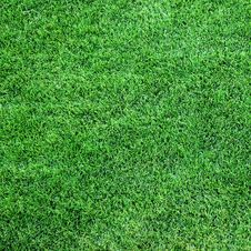 Free Lush Green Grass Stock Image - 6316581