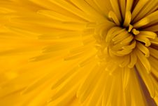 Free Close-up Of Yellow Dahlia Stock Photography - 6317812
