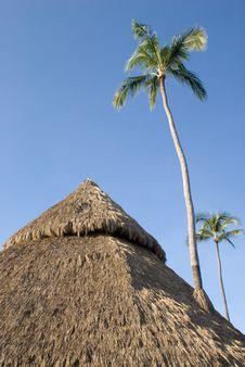 Free Palapa And Palm Stock Photo - 6317990