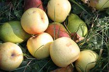 Free Apples Royalty Free Stock Photos - 6318388