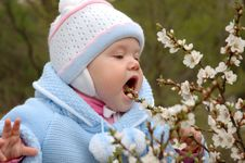 Pretty Little Girl Eat Cherry Blossoms. Stock Photography