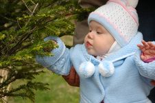Free Pretty Little Girl Play With Conifer Branchlets. Stock Photography - 6318712