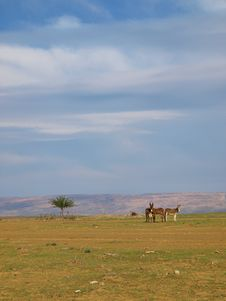 Free Donkeys In The Desert Royalty Free Stock Photography - 6318887