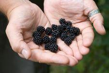 Free Blackberries In His Hands Royalty Free Stock Image - 6319216