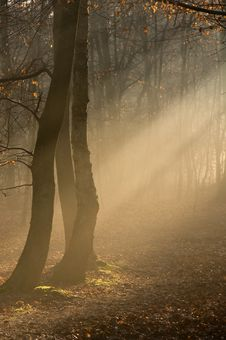 Free Morning Mist In A Wood Stock Photos - 6319323