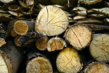Sawn Up Tree Stock Photo
