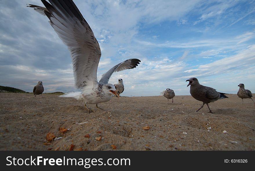 Super Close Seagull