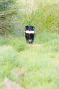 Free Working Black Labrador Retriever Stock Photography - 6321432