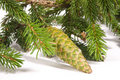 Free Fir Cones Royalty Free Stock Images - 6322559