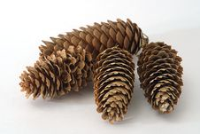 Free Fir Cones Royalty Free Stock Photography - 6320547