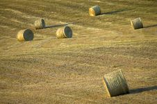 Free TUSCANY Countryside, Hay-balls On The Meadow Royalty Free Stock Photography - 6321707