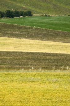Free TUSCANY Countryside Stock Photo - 6321920