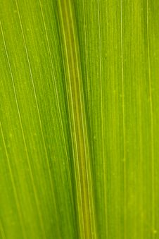 Free Corn Leaf Close-up Green Background Stock Image - 6322111