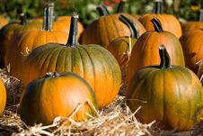 Free Ripe Pumpkins On The Farm Royalty Free Stock Photos - 6322168
