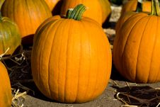 Free Ripe Pumpkins On The Farm Royalty Free Stock Photos - 6322188