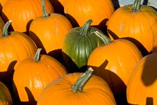 Free Ripe Pumpkins On The Farm Stock Image - 6322211