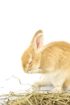 Free Rabbit Stock Photos - 6323433