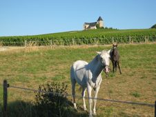 Free French Countryside With Horses Royalty Free Stock Image - 6323676