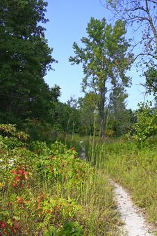 Free Hiking Trail On Inland Marsh Royalty Free Stock Photos - 6324558