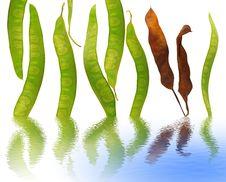 Free Happy Beans Stock Photos - 6324743