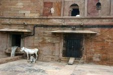 Free Mulan In The Gwalior Fort,  India Royalty Free Stock Photography - 6324797