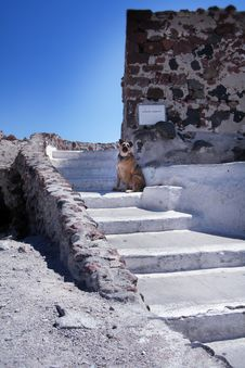 Free Guard Dog In Santorini Stock Image - 6325021