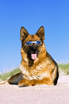 Free German Shepherd Laying On The Sand Stock Photo - 6326580