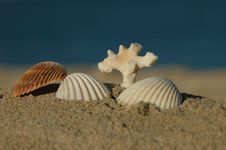 Sea Shells And A Coral Royalty Free Stock Photos