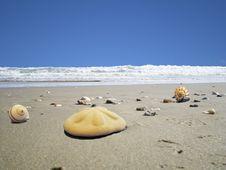 Free Beach Sanddollar Royalty Free Stock Image - 6326786