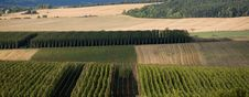 Free Hop Field Country Stock Photography - 6329522