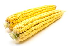 Two Fresh Yellow Corns Royalty Free Stock Images