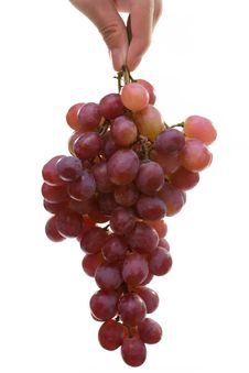 Grape In Hand Royalty Free Stock Images