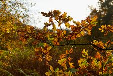 Free Red Yellow And Colorful Autumn Fall Colors In The Forest Royalty Free Stock Photography - 63267297