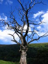 Free Green Landscape, Dead Tree Royalty Free Stock Photography - 6338337