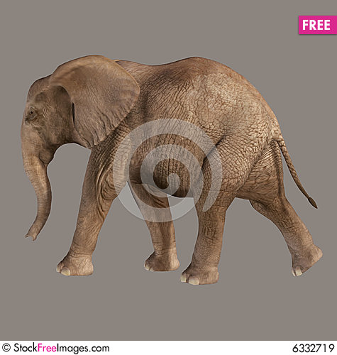 Free Elephant Royalty Free Stock Images - 6332719