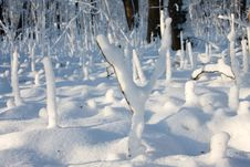 Free Fresh Snow In Forest Stock Photos - 6330563