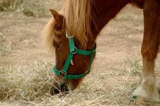 Free Horse Eating Royalty Free Stock Image - 6331346