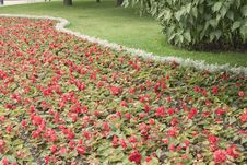 Free Flower Bed Background. Stock Images - 6331864