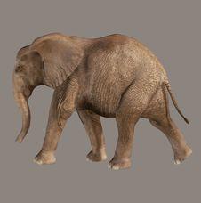 Free Elephant Royalty Free Stock Images - 6332719