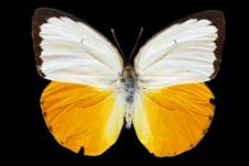 Free Yellow Butterfly Stock Images - 6332724