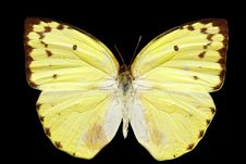 Free Yellow Butterfly Royalty Free Stock Photos - 6332768