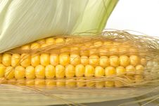 Free Corn Cob Royalty Free Stock Photo - 6332785