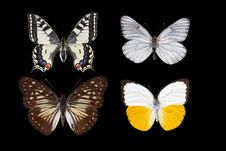 Free Collection Of Butterflies Royalty Free Stock Photos - 6332828