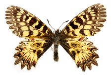 Free Yellow Butterfly Stock Photo - 6332830