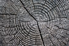 Free Wood Circle Close-up Stock Image - 6333171