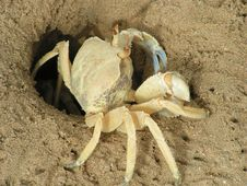 Crab On Sand Royalty Free Stock Photos