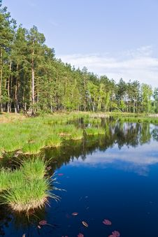 Free Lake In The Forest Royalty Free Stock Photo - 6333265